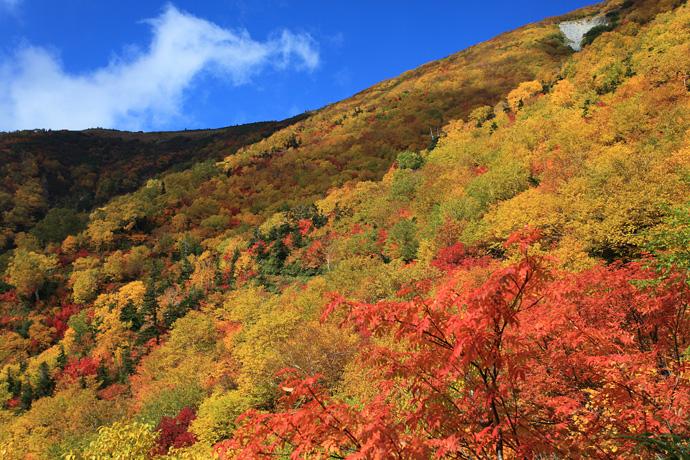http://digital-nature-photo.com/photo%20gallery/2014/Diary/harinoki/img_3953.jpg